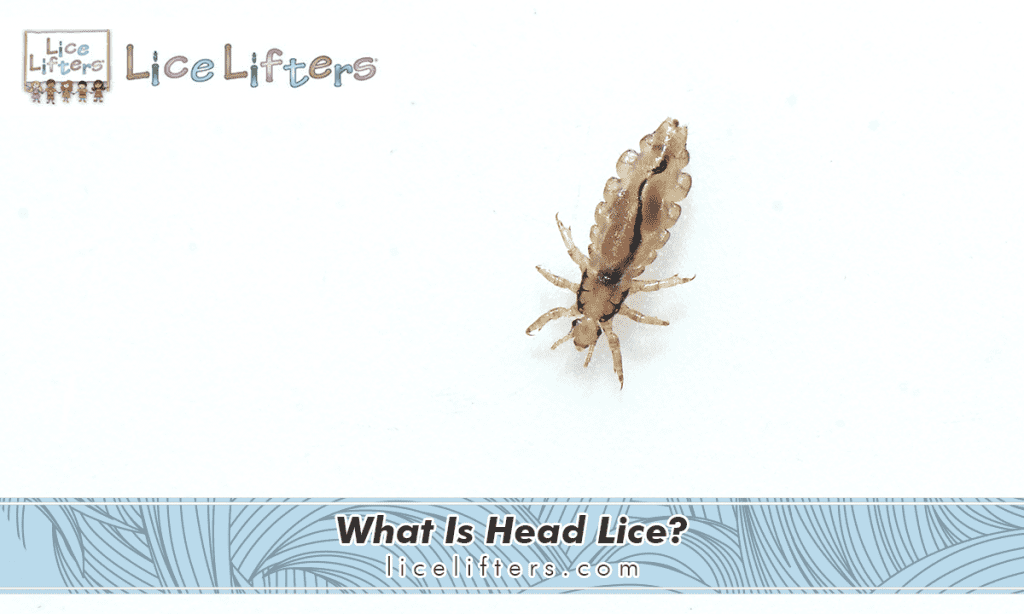 What Is Head Lice? 2019