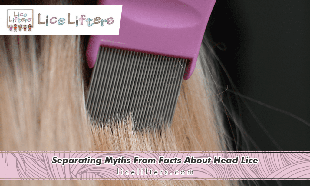 Separating Myths From Facts About Head Lice 2019