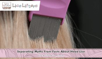 Separating Myths From Facts About Head Lice 2020
