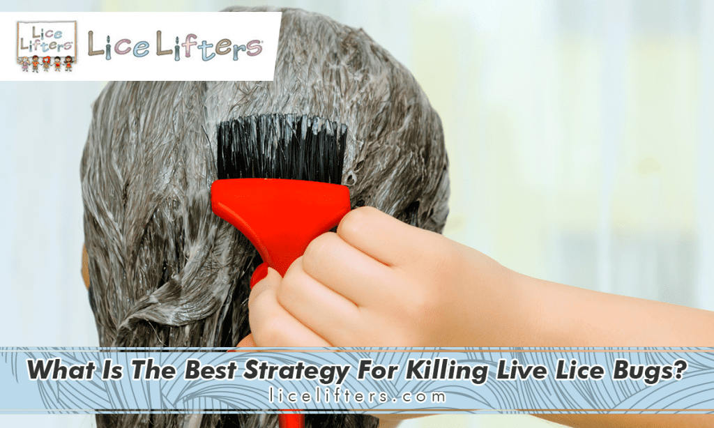 What is the best strategy for killing live lice bugs? 2019