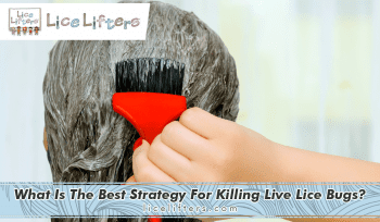 What is the best strategy for killing live lice bugs? 2020